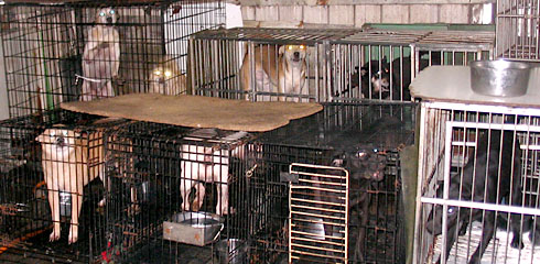 Dogs in cages in Taiwan